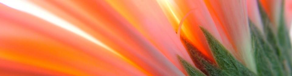 mediumship-flower